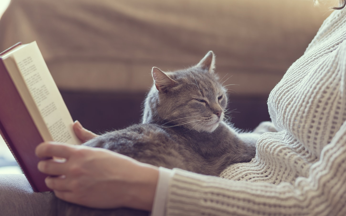Gray cat lying in lap of woman reading a book.