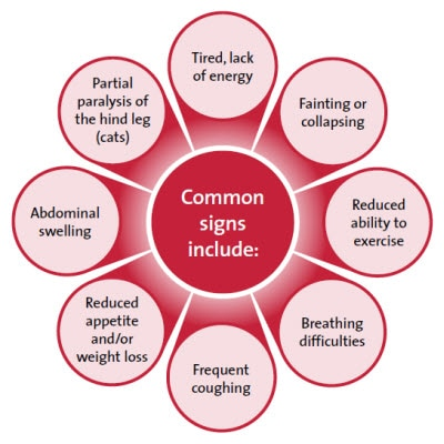 Common signs of heart disease